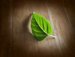 जीव विज्ञान से दस प्रश्न कक्षा ११ के  वनस्पति विज्ञान विषय पर-भाग -१