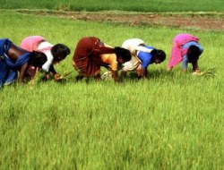 Test Your Knowledge on Agriculture Multiple Choice Questions