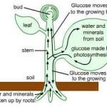 quiz_biology_transportation