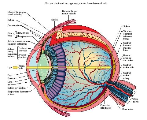 human_eye