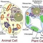 cell-biology-cbse-VII