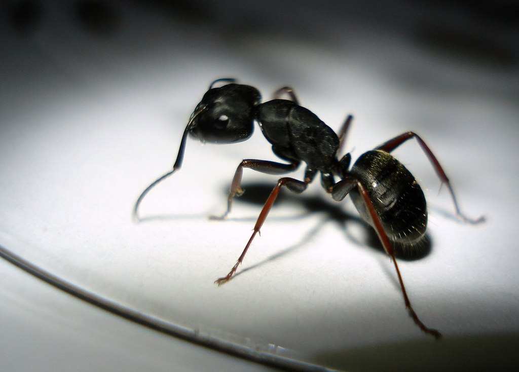 Ant-biology-science-quiz