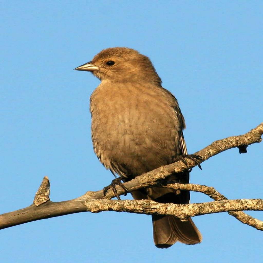 bird-5244001