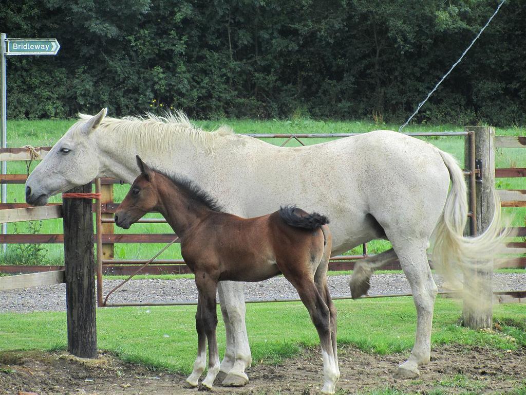 quiz-horse-zoology