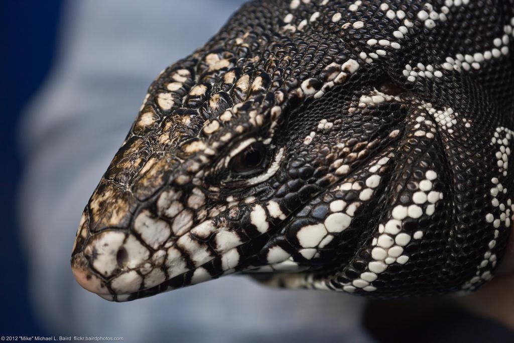 Scenes from Dennis Sheridan's Reptiles Mindwalk 09Jan2012