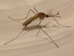 Malaria Life Cycle : Amazing Video