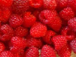Raspberry: 10 Question Quiz