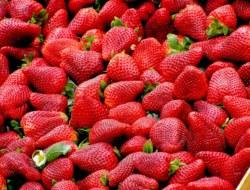 Strawberry: 10 Question Quiz