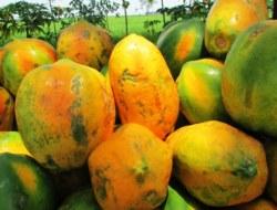 Papaya: 10 Question Quiz