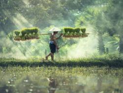Agriculture Quizzes : 10 MCQs
