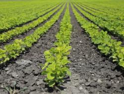 Agriculture Facts Quiz : 10 MCQs
