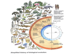 Origin of Life and Evolution Quiz : 10 Multiple Choice Questions