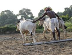 Agricultural Sector of Indian Economics Quiz : 10 MCQs