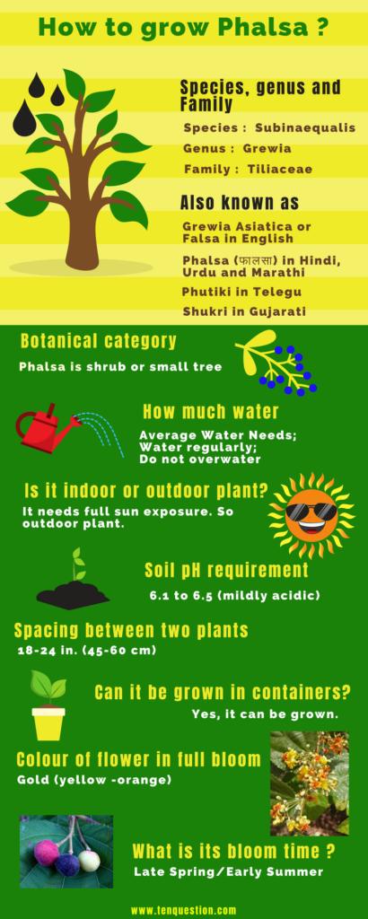 How to grown Phalsa Tree ?