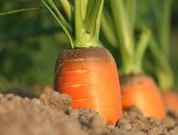 Quiz on Agriculture : 10 MCQs