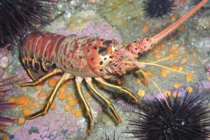 lobster quiz