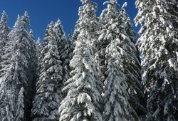 Winter Facts: 10 Question Quiz